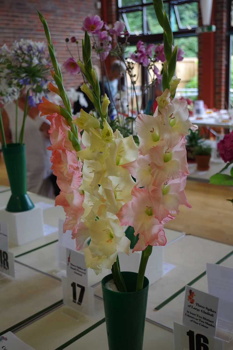 https://fandmhs.co.uk/F&P2018gladioli.jpg